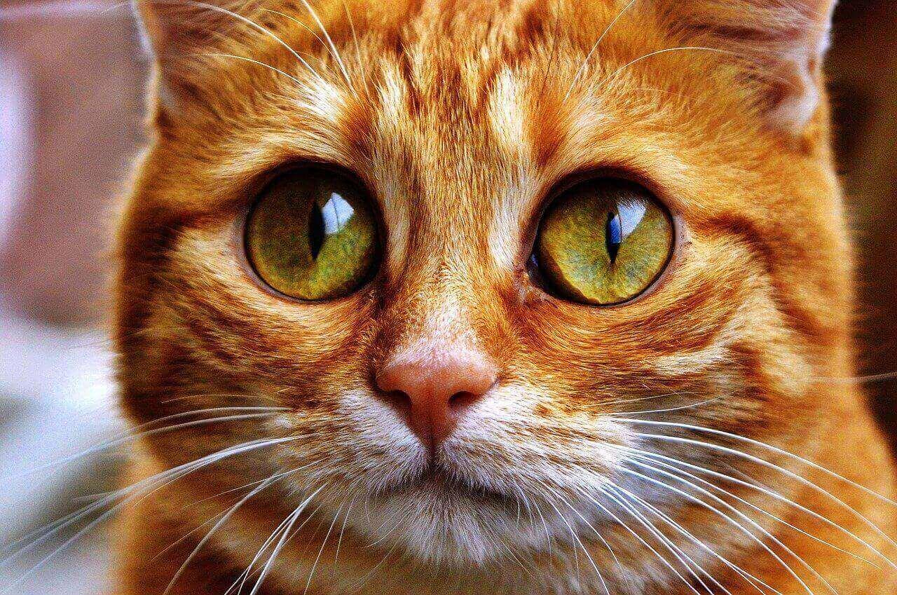 Cute Looking Cat