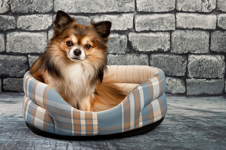 Dog Seating on Pet Bed