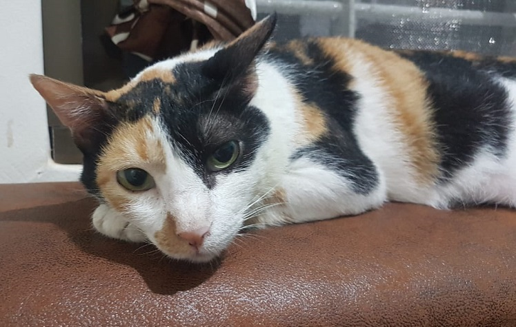 Tannu from indianpets.in