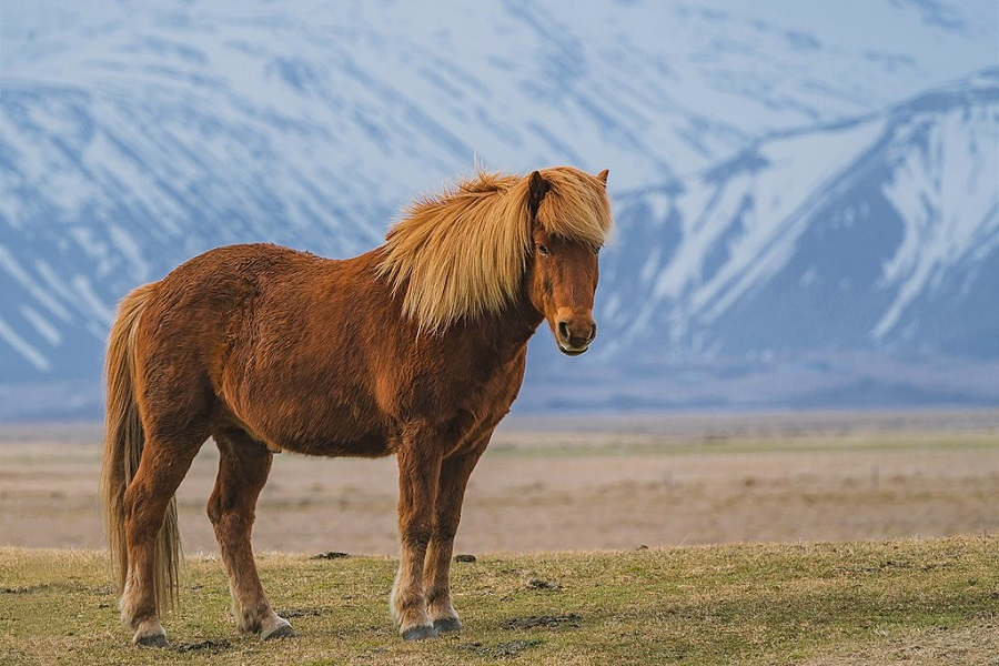 Zaniskari Horse Breed
